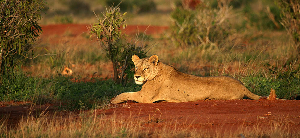 Tsavo_East_National_Park_006
